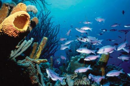 Los mejores destinos de buceo en el Caribe
